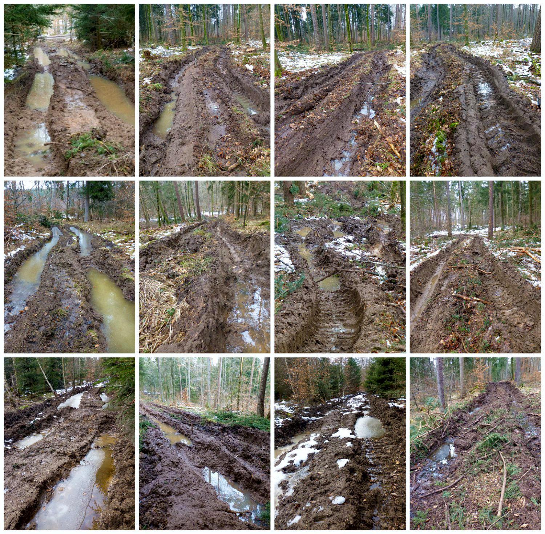 Aktuelle Schäden der Holzernte 2015