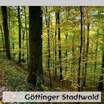 Göttinger-Stadtwald