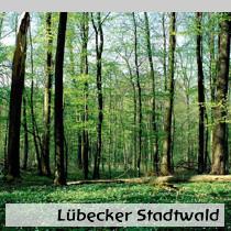 Lübecker-Stadtwald