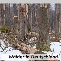 Wälder-in-Deutschland