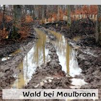 Wald-bei-Maulbronn