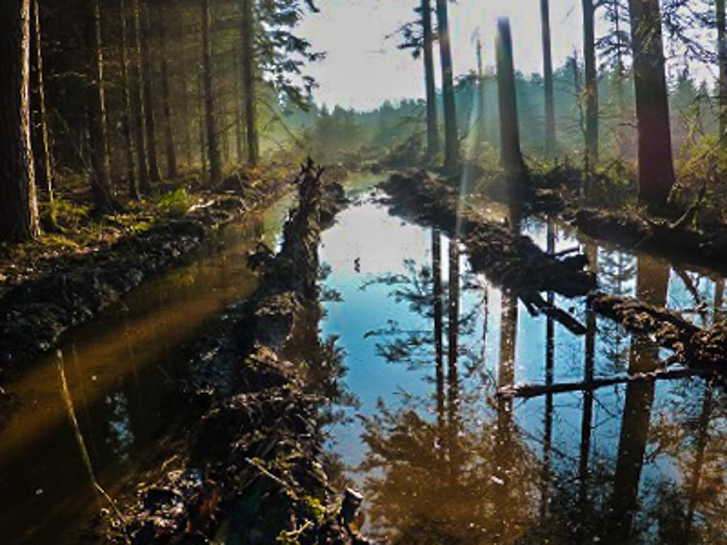 """Zweites Bild: """"Gasse"""" im Wald bei Wüstenrot"""